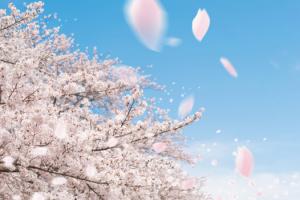春に関するかっこいい言葉を調査 サラッと使ってかっこつけよう